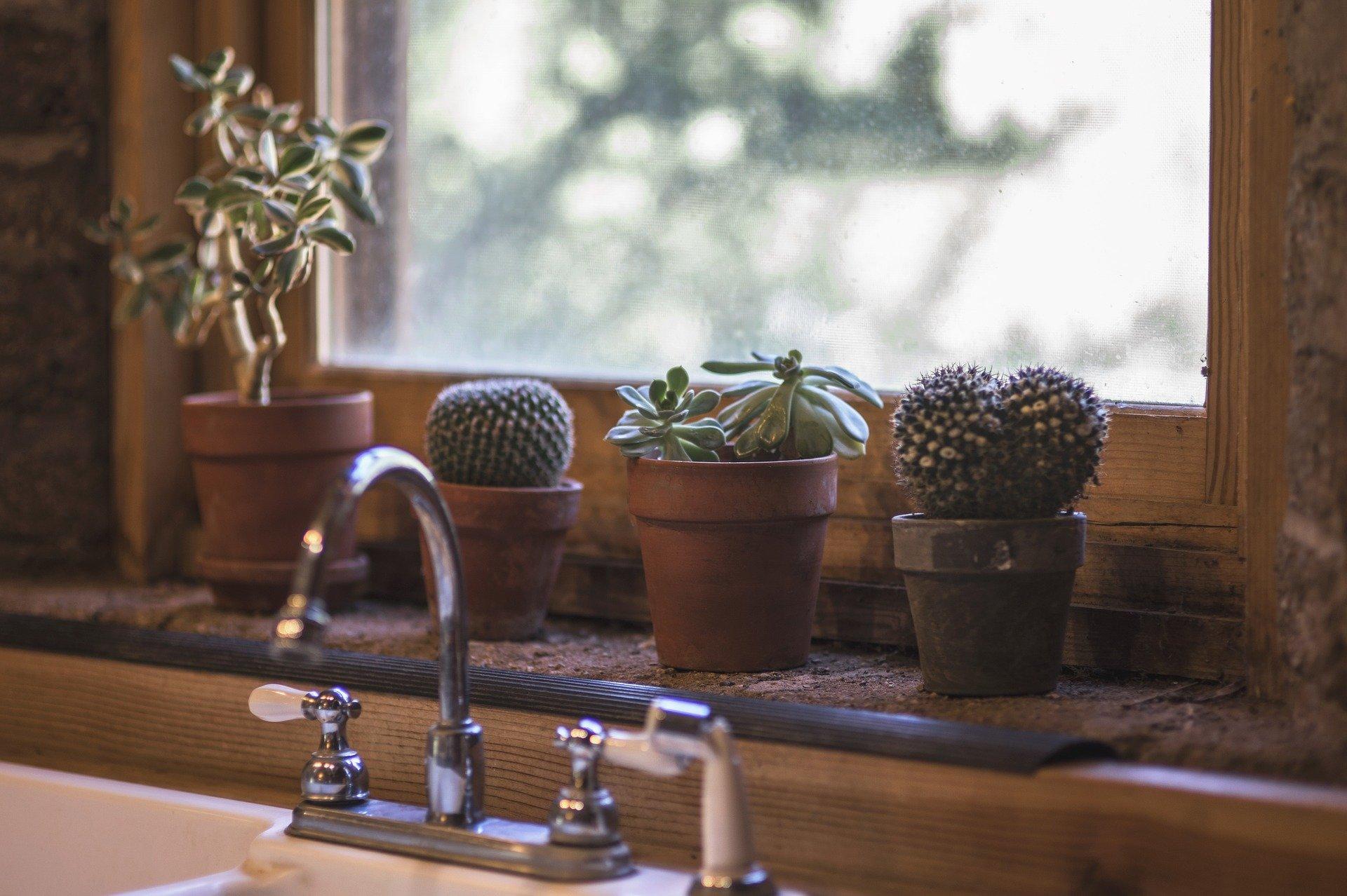 cactus-2556000_1920