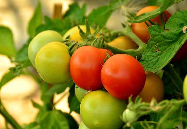 rajčta