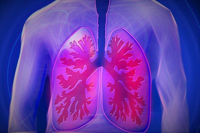 ľudské pľúca.jpg